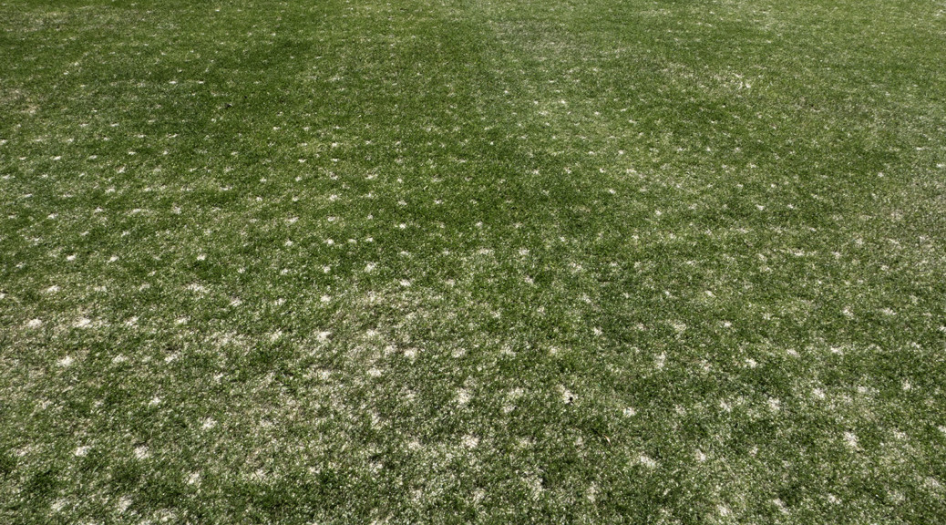turf after plugging